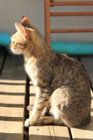 Cat Stock 118 by Malleni-Stock