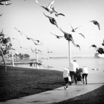 Bird Attack by myoung4828