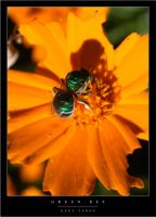 Green Bee by wulfster