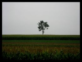 Lonely Tree by FicktionPhotography