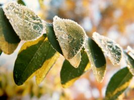 Frosty Leafs by iluvobiwan91