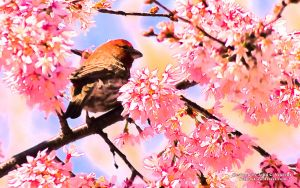 Spring Bird in Pink Desktop by yellowcaseartist