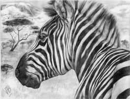 Zebra by drinkerofthewind