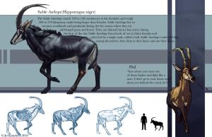 Sable Antelope Bovine study by JetEffects