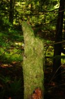 Mossy Stump by iwonderbc