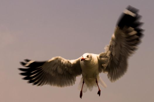 Caught In Flight.. by preethi524