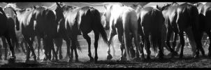 Rockley Rodeo 16 by engaged-vacancy