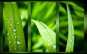 Green by dgangj