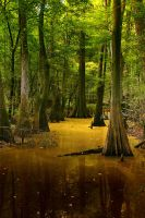 Congaree National Park by Silicon640c