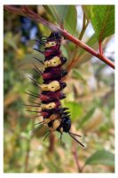 Caterpillar 2 by kiew1