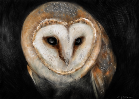 Barn owl by circle00