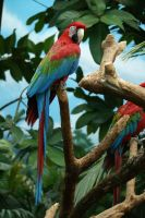 Macaw 004 by MonsterBrand-stock