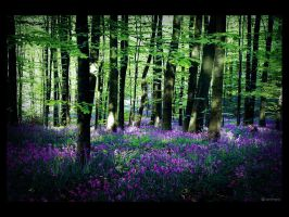 Purple carpet by caithness155
