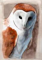 Barn Owl by sarahddl