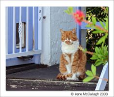 Ginger Cat on Doorstep by substar