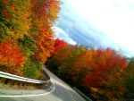 Road of Colors by Cessdii