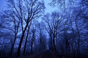 blue hour by augenweide