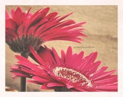 A Vintage Flower's Life by amuchina
