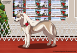 Lani_Bw's Christmas conformation show by Aquene-lupetta
