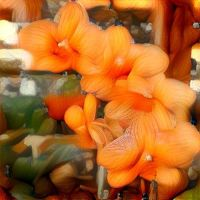 enchanted garden ... orchids by iside2012