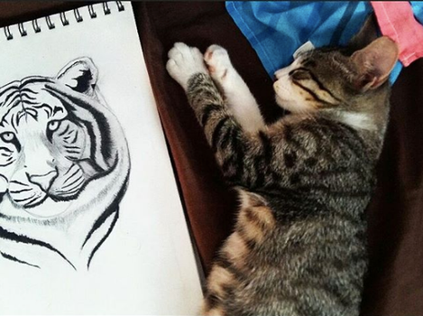 my cat Ari dreaming of being a tiger by Andi-Montes