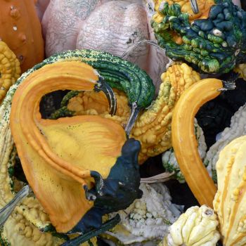Spooning Gourds by magpie-poet