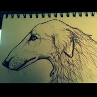Borzoi Sketch by KahlaWolf