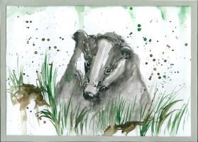 Badger by AnnaBitti