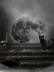 Cats in a Full Moon rain... by FullMoonWarriors