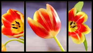 Triptych of Spring by Nameda
