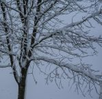 Snow covered tree by Reby-c
