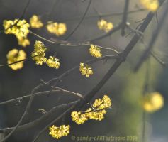 Shades Of March 14 by dandy-cARTastrophe