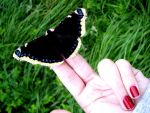 Butterfly on my hand by MFM8