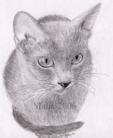 Russian Blue Cat: Nellie by TouchOfAutumn