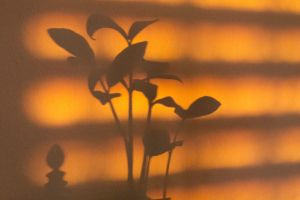 Plant Shadow by Anonimus79