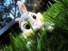 Thumper by tinaowl
