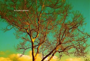 Tree in Los Angeles. _21 by NiftyPhotography