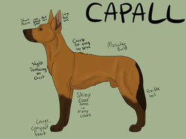 Capall - New Dog Breed by SirJudeNolan