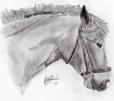 A drawing of Whiskey. by Julia-Hannah