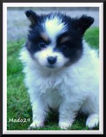 baby butterfly dog by Mado29