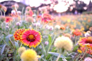 colors of flower by spapps