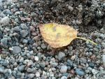 Leaf in the sand by Flash-Lite