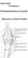Anatomy Tutorial: Posterior. by Life-Symphony