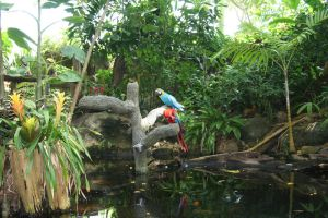 parrots in the jungle by goodiebagstock