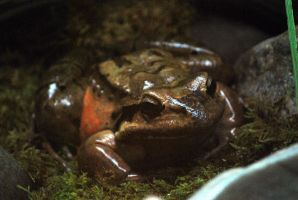 frog 2 by meihua-stock