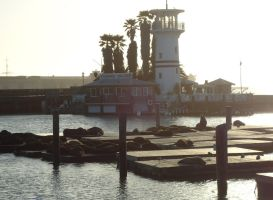 the seals at pier 39 by dp-designs