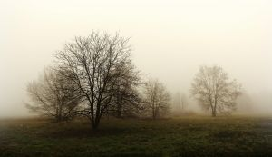 Arbre de la brume 2 by k-simir