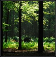 August forest green by jchanders