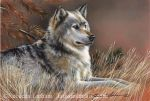 At Rest - Timberwolf by rebeccalatham