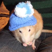 The Rat In The Hat by LadyShamisen